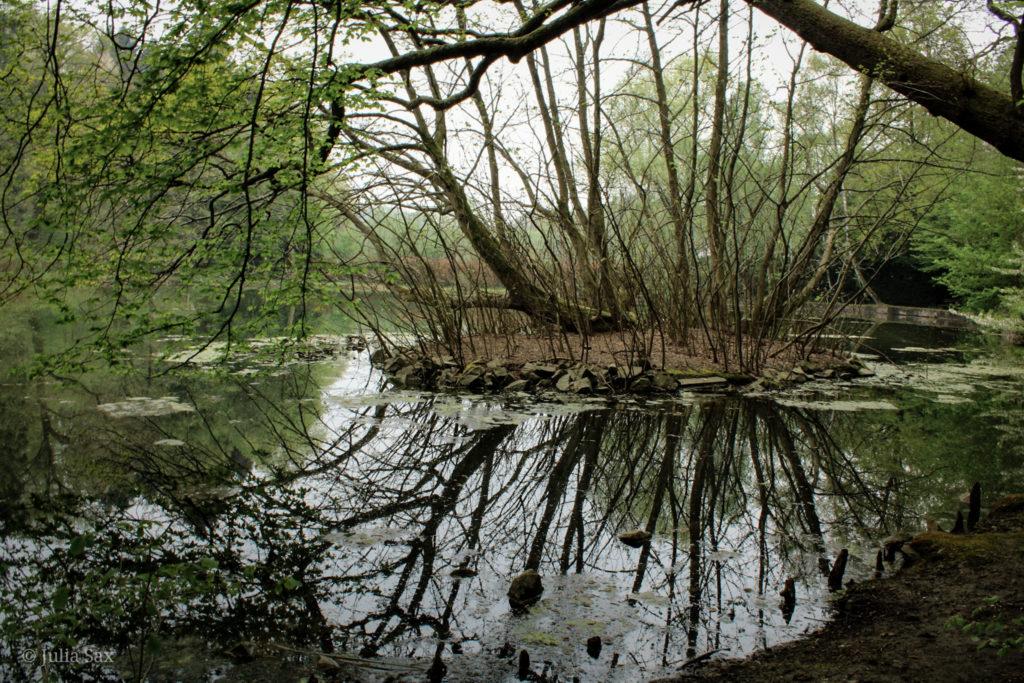 Die Insel im Teich