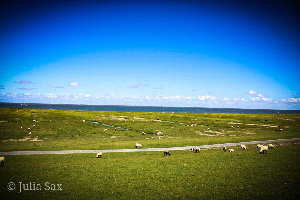 Blauer Himmel über den Schafen
