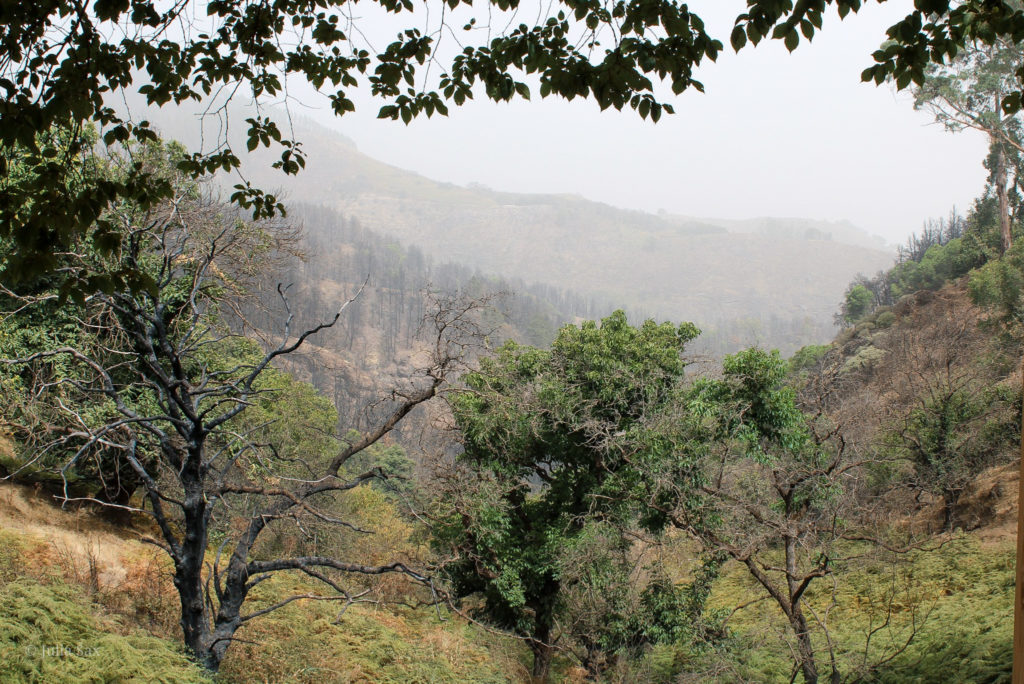 Wälder im Landesinneren