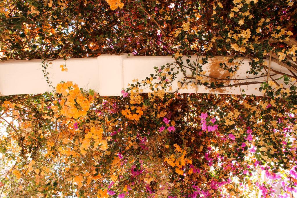 Wunderschöne Blumen in Puerto de Mogán